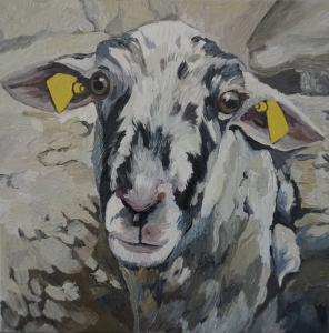 Portrét ovce